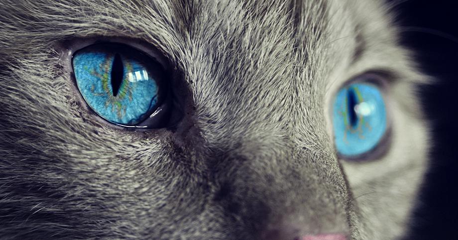 Franquicia mascotas, animales, gatos, perros