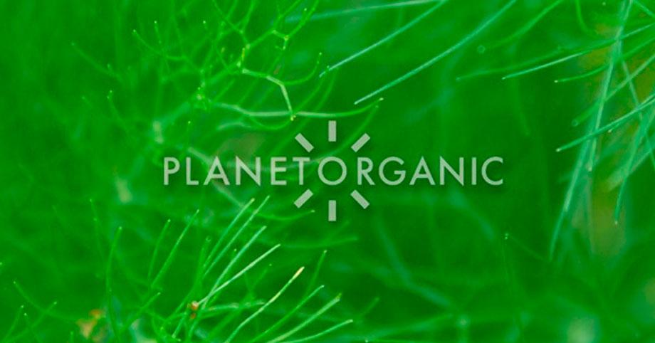 Franquicia Planet Organic
