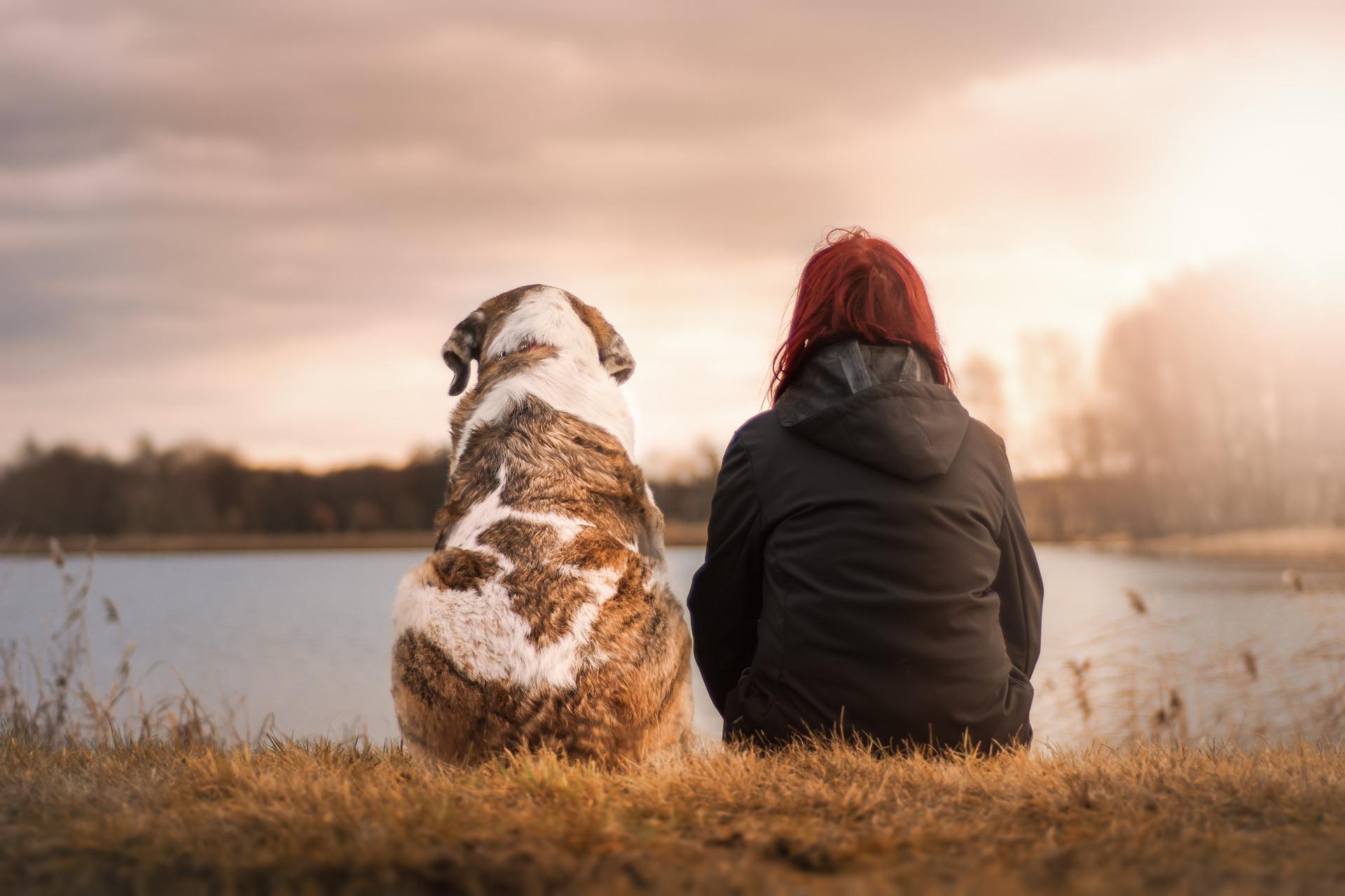 permisos y licencias para crematorio de mascotas